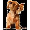 Doggy - Animals -