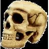Skull - Ljudje (osebe) -