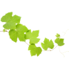 Grapes Leaves - Plants -