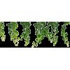 Grapes Leaves - 植物 -