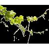 Grapes Leaves - Piante -