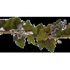 Grapes Leaves - Biljke -