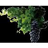 Grapevine - 植物 -