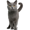 Gray Cats - Animales -