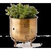 Green. Gold - Pflanzen -
