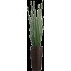 Green Houseplants - Rastline -