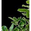 Green Leaves - Plants -