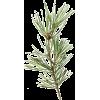 Green. Needle - Rastline -