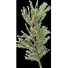 Green. Needle - Plants -