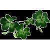 Green Shamrocks - Plants -