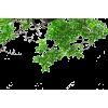 Green Tree Leaves - Uncategorized -