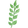 Green leaf - Plants -
