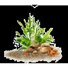Ground Flowers - Priroda -