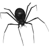 Halloween Spider - Animals -