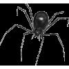Spider - Illustrations -