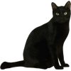 black cat - Animals -