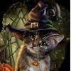Halloween cat - Animali -