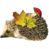 Hedgehog - Animals -