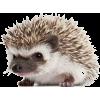 Hedgehog - Equipment -