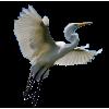 Heron - 動物 -