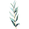 Hfgg - Plants -