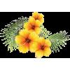 Hibiscus flower art - Illustrations -