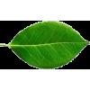 Hojas - Plants -