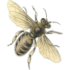 Honey Bee Graphic - Animals -