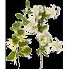 Honeysuckle /Jasmine Flower - Profumi -