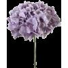 Hortensia - Biljke -