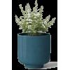 Houseplant - Biljke -