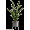 Houseplant - Pflanzen -
