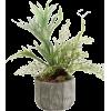 Houseplant - Plantas -