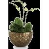 Houseplants - Plantas -