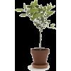 Houseplants - Plants -