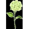 Hydrangea Flower - Uncategorized -