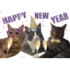 I Have Cat HAPPY NEW YEARS!   I Have Ca - Uncategorized -