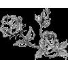 Illustration  Rose - Illustraciones -