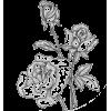 Illustration  Rose - Ilustracije -