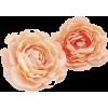 Illustration  flower - Plants -