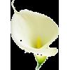 Item - Растения -