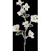 Item - Plants -