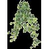Ivy - Biljke -