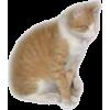 Japanese cat - Animals -