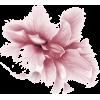 Plants Pink - Plants -