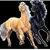 Horses - Animali -