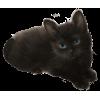 Kitten - Animais -