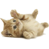 Kitty - Živali -