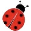 Ladybug - Zwierzęta -