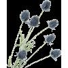 Lante - 植物 -